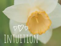 Die Sache mit der Intuition