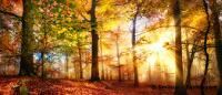 Natur kann dir Kraft für dein Leben geben. Wenn du sie lässt...
